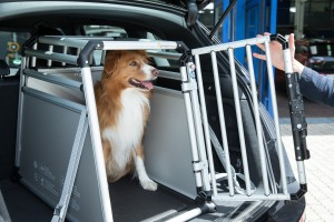 Allianz, ATZ, Crawltest, Hunde in Auto richtig transportieren.